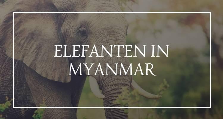 Elefanten Myanmar